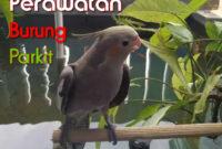 perawatan-burung-parkit