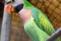 cara-merawat-burung-betet