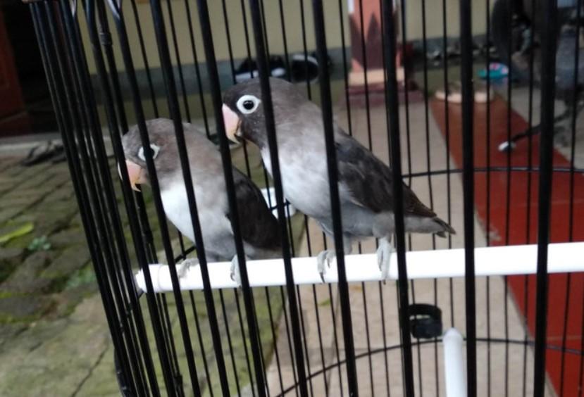 lovebird-batman