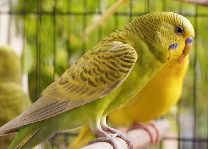 karakter-burung