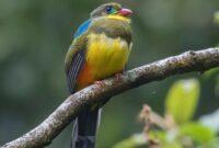 burung-endemik-di-jawa