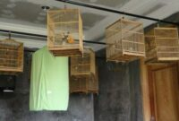 cuci-otak-burung