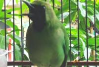 burung-yang-tidak-mudah-mati