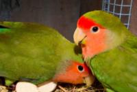 jenis-burung-yang-tidak-mudah-stres