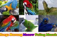 harga-burung-macaw