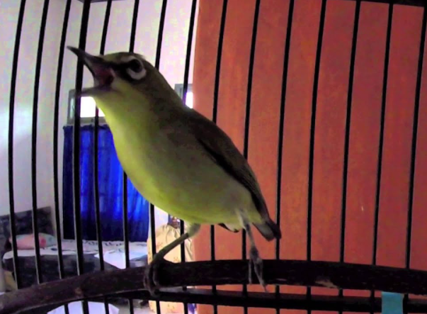 gambar-burung-kecil