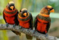 burung-yang-tidak-boleh-dipelihara