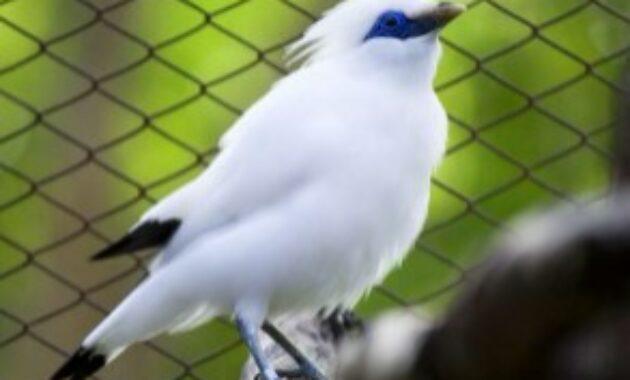 burung-yang-tidak-boleh-dipelihara-menurut-islam
