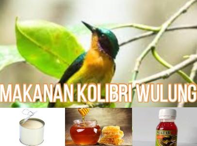 makanan-burung-kolibri-wulung